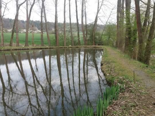Private Teichanlage Naturefish