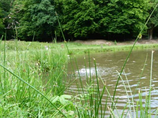 Kiloteich #1 Naturefish Wernborn