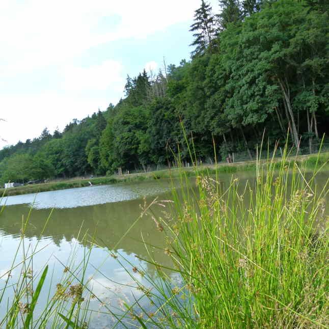 Naturefish Teich 4